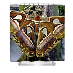 Atlas Moth Shower Curtain