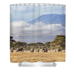 Shower Curtain featuring the photograph Mount Kilimanjaro Amboseli  by Richard Garvey-Williams