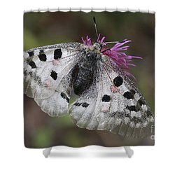Mountain Apollo Parnassius Apollo Shower Curtain by Amos Dor