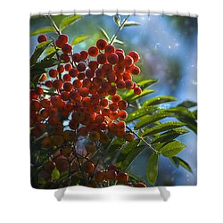 Shower Curtain featuring the photograph Mountain Ash by Yulia Kazansky