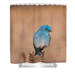 Shower Curtain featuring the photograph Mountain Bluebird by Cascade Colors