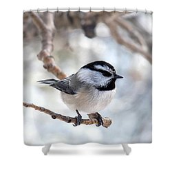 Mountain Chickadee On Branch Shower Curtain
