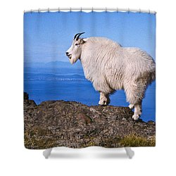 Shower Curtain featuring the photograph Mountain Goat On Klahane Ridge by Jeff Goulden