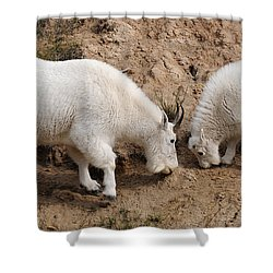 Mountain Goats At The Salt Lick Shower Curtain by Vivian Christopher
