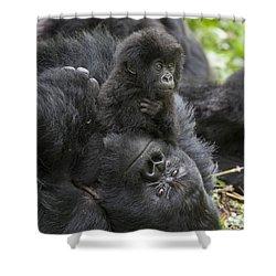 Mountain Gorilla Baby Playing Shower Curtain by Suzi  Eszterhas