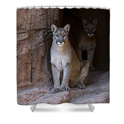 Shower Curtain featuring the photograph Mountain Lion 1 by Arterra Picture Library