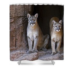 Shower Curtain featuring the photograph Mountain Lion 2 by Arterra Picture Library