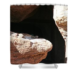 Shower Curtain featuring the photograph Mountain Lion by David S Reynolds