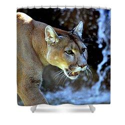 Mountain Lion Shower Curtain by Deena Stoddard