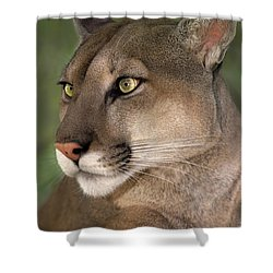 Mountain Lion Portrait Wildlife Rescue Shower Curtain by Dave Welling