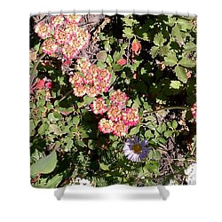 Shower Curtain featuring the photograph Mountain Wildflowers by Fortunate Findings Shirley Dickerson