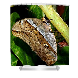 Mournful Owl Butterfly Shower Curtain by Amy McDaniel