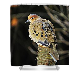 Mourning Dove On Post Shower Curtain by MTBobbins Photography