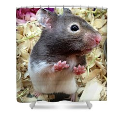 Mouse In The House Shower Curtain by Carla Carson