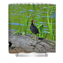 Mouthy Moorhen Shower Curtain by Al Powell Photography USA