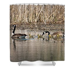 Moving Along Shower Curtain by Dale Kincaid