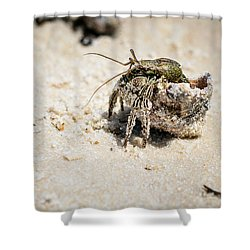 Moving Day Shower Curtain by Sennie Pierson