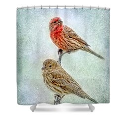 Mr And Mrs House Finch Digital Paint Shower Curtain by Debbie Portwood