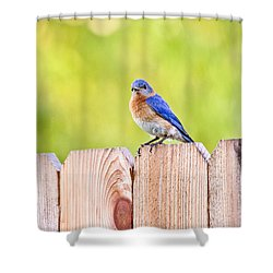 Mr. Bluebird Shower Curtain by Scott Pellegrin
