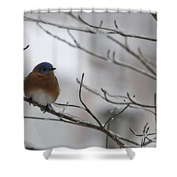Mr Bluebird Shower Curtain by Teresa Mucha
