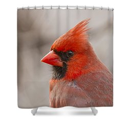 Mr Cardinal Portrait Shower Curtain