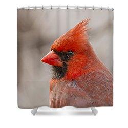 Mr Cardinal Portrait Shower Curtain by Mircea Costina Photography