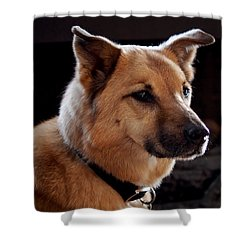 Mr. Charlie Shower Curtain by Rona Black