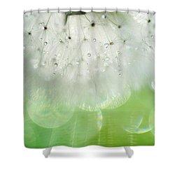 Mr. Dandelion. Inner Light Shower Curtain by Jenny Rainbow