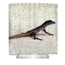 Shower Curtain featuring the photograph Mr. Gecko by Pennie  McCracken