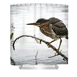 Mr. Green Heron Shower Curtain by Cheryl Baxter