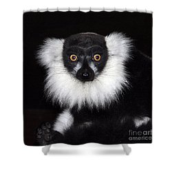 Shower Curtain featuring the photograph Mr Lemur by Terri Waters