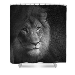 Mr Lion In Black And White Shower Curtain by Thomas Woolworth
