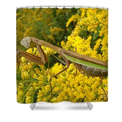 Shower Curtain featuring the photograph Mr. Mantis by Sara  Raber