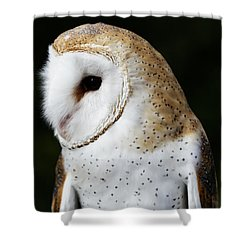 Mr Owl  Shower Curtain