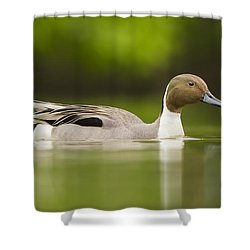 Mr Pintail  Shower Curtain by Mircea Costina Photography