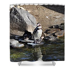 Mr Popper's Penguins Shower Curtain by Bill Cannon