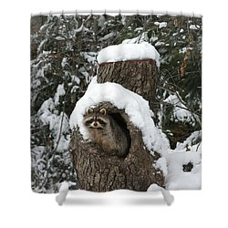 Mr. Raccoon Shower Curtain by Diane Bohna