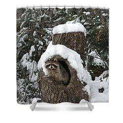 Mr. Raccoon Shower Curtain
