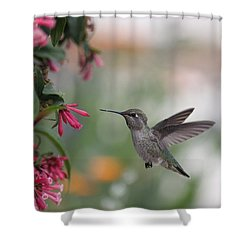 Shower Curtain featuring the photograph Mrs. Little Anna's Hummingbird by Amy Gallagher