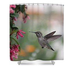 Mrs. Little Anna's Hummingbird Shower Curtain