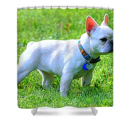 Ms. Quiggly - French Bulldog Shower Curtain