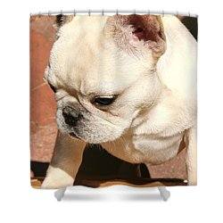 French Bulldog Ms Quiggly  Shower Curtain