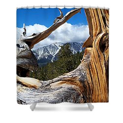 Mt. Charleston Thru A Tree Shower Curtain