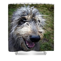 Muddy Dog Shower Curtain