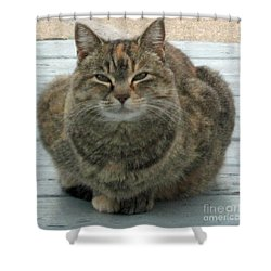 Muffin The Feral Cat Shower Curtain