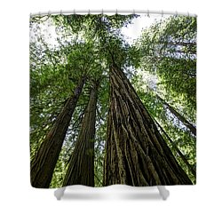 Muir Woods I Shower Curtain
