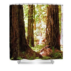 Muir Woods Shower Curtain