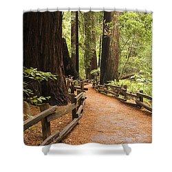 Muir Woods Trail Shower Curtain