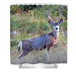 Shower Curtain featuring the photograph Mule Deer Buck by Karen Shackles