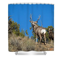 Mule Deer Buck Shower Curtain